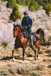 SAR Tiki Stranger with Carol Giles on top. Stranger's only rider in over 5000 miles of endurance competition.
