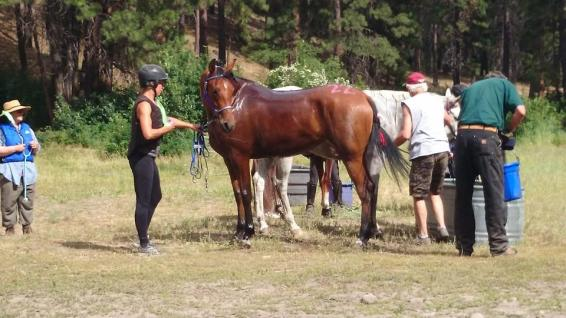SAR Trainer, Celena Pentrack with SAR Valiant Heart, at the Renegade Rendezvous Ride, 2014.