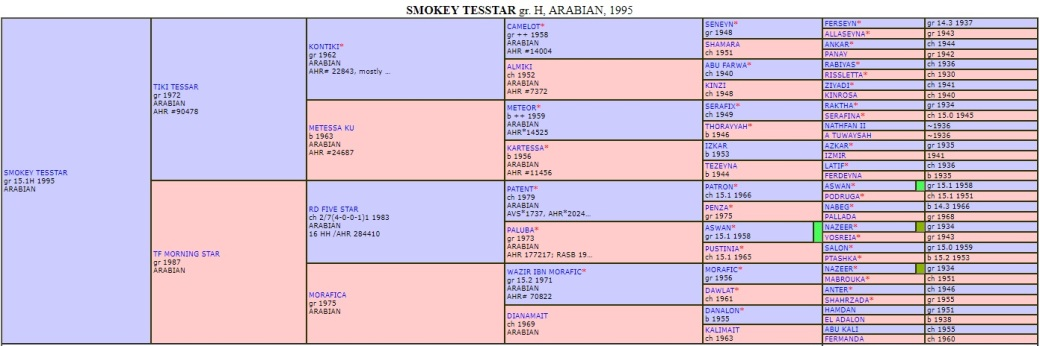 Smokey pedigree big